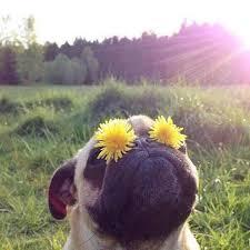 dogflowersimages